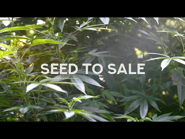 Airfield Supply Co. - Seed to Sale