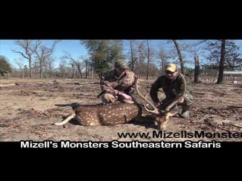 Exotic Animal Hunting For Axis Deer In Florida With South Coast Safaris