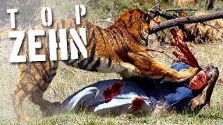 10 grausame Zoo-Unfälle! ACHTUNG, drastische Bilder!
