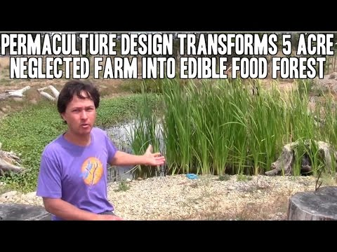 Permaculture Design Transforms Neglected Farm into Food Forest
