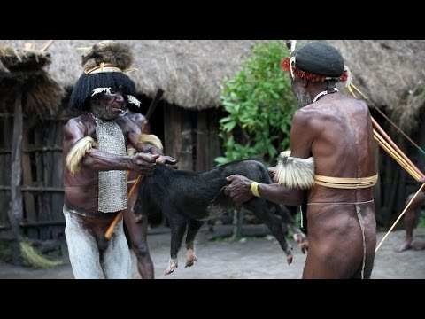 Pig slaughter by Dani tribesmen - Baliem Valley, Papua province, island of New Guinea