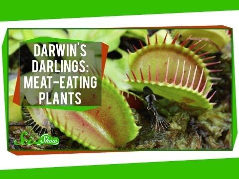 Darwin's Darlings: Meat-Eating Plants
