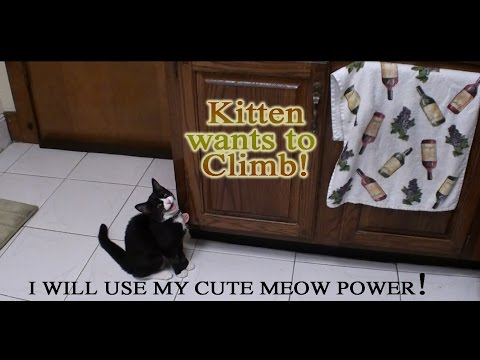 Cute Kittens soft cry - I want to go up on table!