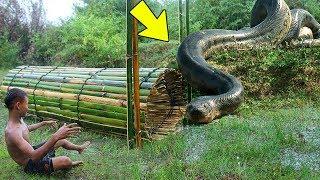 Uomo Cattura Gigantesco Anaconda con Una Trappola! - VIDEO VERITA'