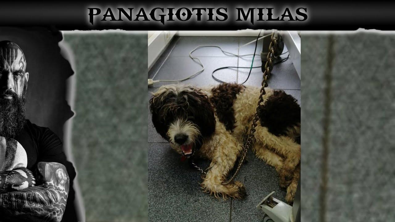 LIVE - Η ΣΥΜΜΟΡΙΑ ΤΩΝ ΑΓΓΕΛΩΝ - ΕΚΤΑΚΤΟ - Βοηθάμε ένα σκυλάκι να μην μείνει ανάπηρο.