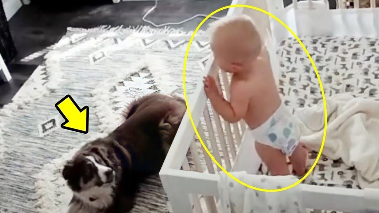 Mutter stellt Kamera ins Zimmer ihres Babys und glaubt nicht, was ihr Hund nachts macht!