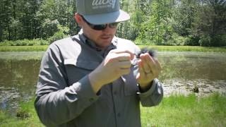 Sight Fishing for Largemouth Bass on the Fly + Random Bonus Footage!