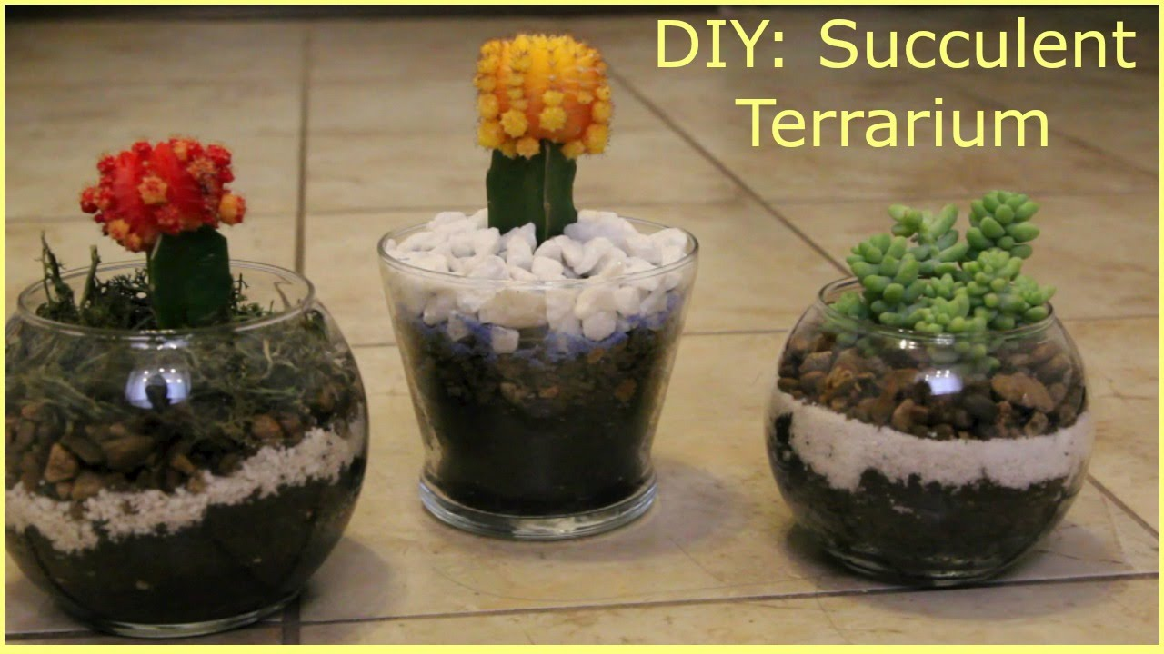 Diy Affordable Succulent Terrariums For Mother S Day Youtube