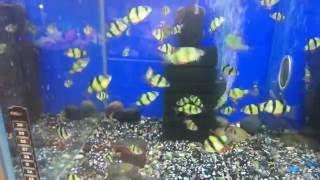 GloFish  - генетически модифицированные флуоресцирующие рыбки.