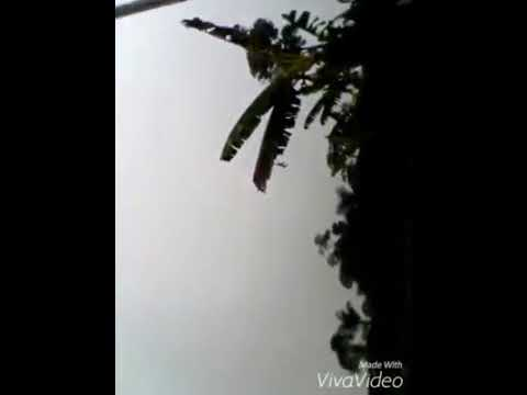 Enfrentamiento de cocaleros y antinarcoticos en guaviare