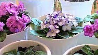 Комнатные растения моей подруги ./Комнатные цветы ./Домашние растения . - Комнатные растения моей подруги . Обзор. На моем канале : https://www.youtube.com/channel/UCVfNzLQOkHhJyOpT3nwXGEg есть много простых...
