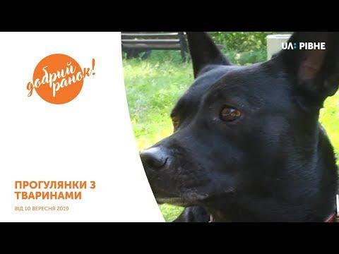 Телеканал UA: Рівне: Прогулянки з тваринами