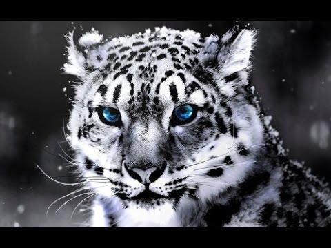 SILENT ROAR: Searching For Snow Leopard - World Documentary Films