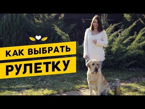 Рулетки для собак: как выбрать поводок для собаки? | Обзор зоотоваров Pethouse.ua