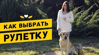 видео Шлейка для кошки: особенности выбора и приучения