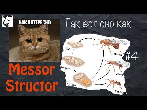 Четыре стадии развития муравья полное превращение