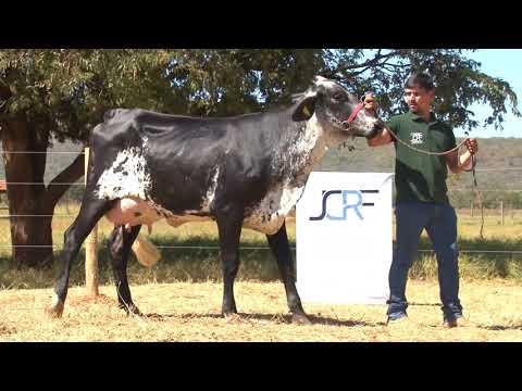 LOTE 1   LEILÃO JCRF   2393