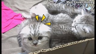 Kittens Sleeping When Other Kittens Want To Outside | Kittens Funny 2019