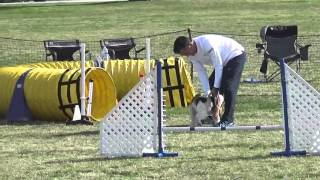 This video is about Meg's Master STD & JWW Agility. Judge Geoff Tea...