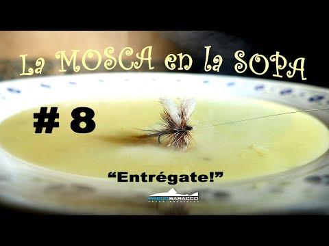 La MOsca en la Sopa #8: