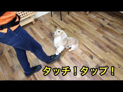 タッチ!タップ!〜犬のしつけは大阪のsmart-dog〜
