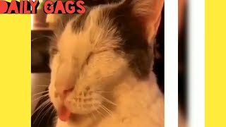Daily Gags #9 || Funny Cats & Cucumbers || Funny Animals Fail Compilation July 2019 ||