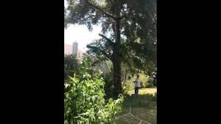 Tony's tree work (:(11)
