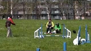 レグスルの同胎(お姉ちゃん)のアルバちゃん。2011年5月練習会.