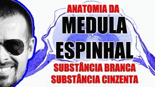 Vídeo Aula 091 - Sistema Nervoso - Anatomia da Medula Espinhal: Substância branca e cinzenta