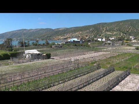 شاهد: نظام زراعي فريد في العالم: البحر يسقي الخضروات إزاء شح المياه في تونس…  - 15:58-2021 / 4 / 15