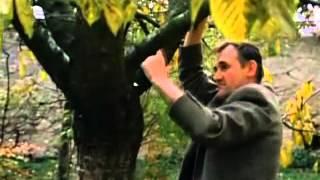 Land des Schweigens und der Dunkelheit (das Ende) - Werner Herzog