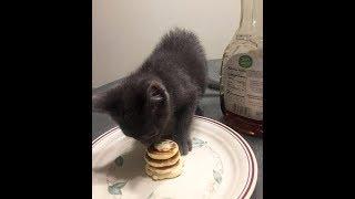 このちっちゃなパンケーキは…? 飼い猫を恋人に預けると 思わずにやけち...