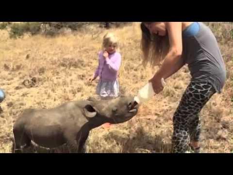 Baby Black Rhino Takes a Bottle | Lewa Wildlife Conservancy, Kenya