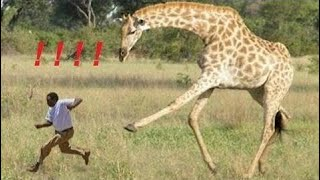 [Best Animal Fights]  [Wild Animal Attack]  Revenge animals from humans - animals attack on the hum