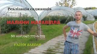 видео Варащивание малины на Украине.