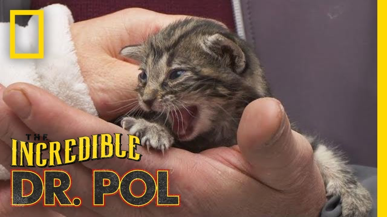 Kitten With a Cold | The Incredible Dr. Pol