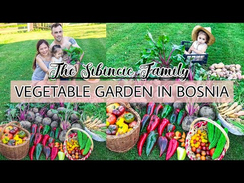 A DAY IN OUR LIFE IN BOSNIA | HARVEST DAY OF OUR HOMEGROWN ORGANIC VEGETABLE GARDEN IN BOSNIA