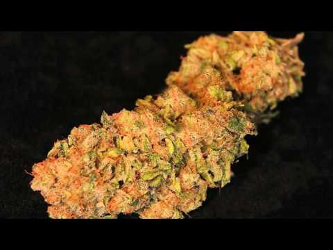 Euphoria Wellness Medical Marijuana - Strain Showcase - Cheese