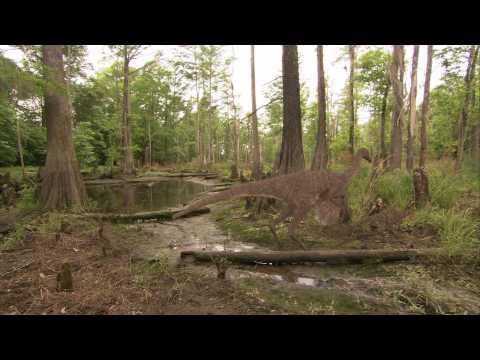 Ornithomimus animation — Bog