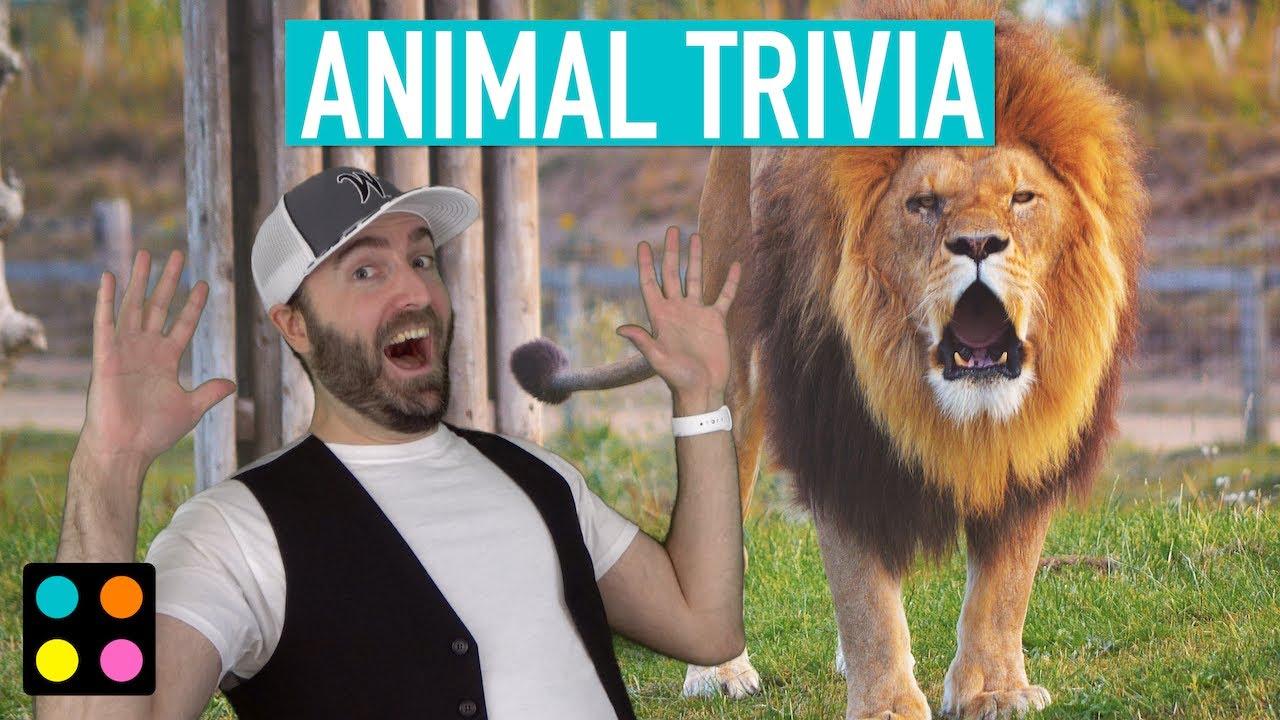 Animal Trivia | Now You Pick