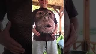 Прикол. Майка с обезьяной