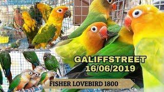 GALIFFSTREET BIRDS MARKET(KOLKATA) PRICE UPDATE 16 06 2019 /Asia