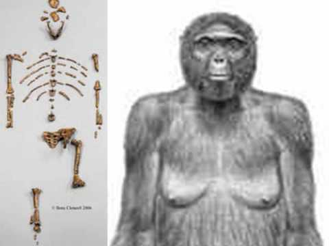Mothers Lucy & Ardi Africanas: Hoaxes-First Parents Died in Iraq-Adam & Eve