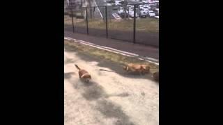 奈央・悠木・繭菓 鈴木繭菓 検索動画 16