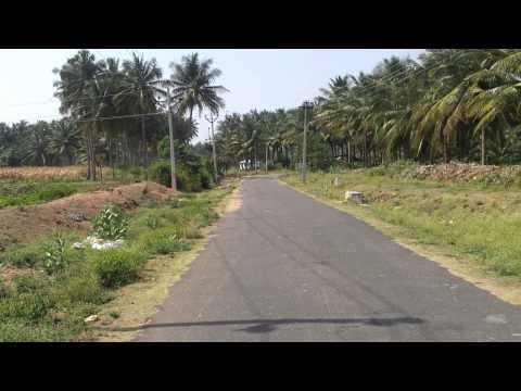 pollachi coconut form