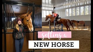 getting a new horse! (vlog #43)