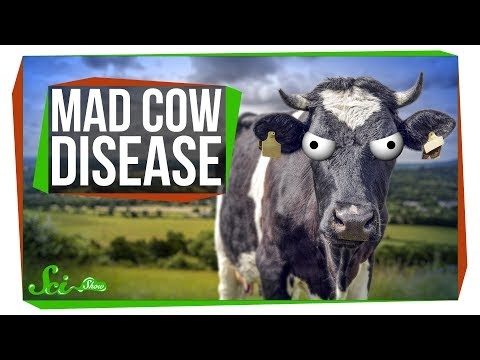 What Happened to Mad Cow Disease?
