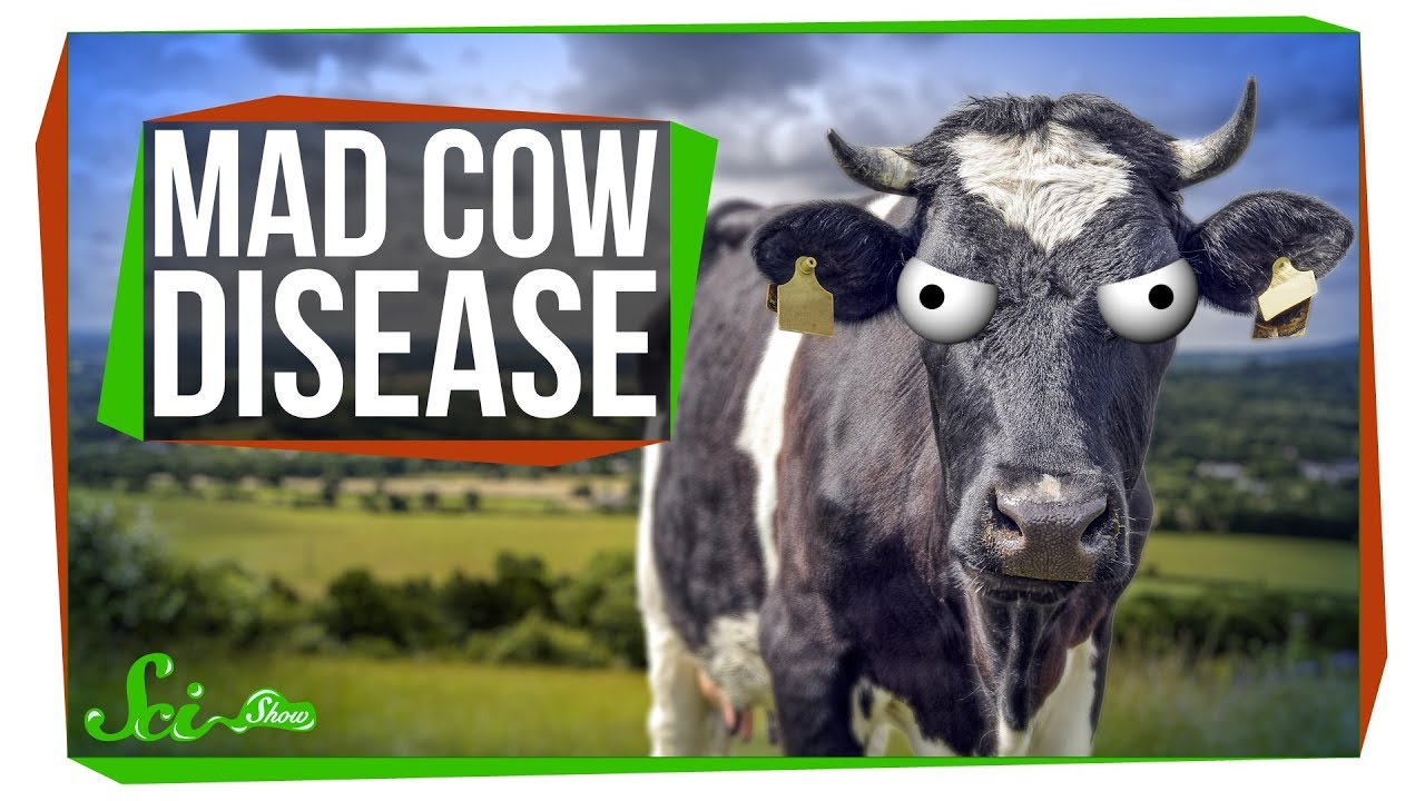 mad cow When it comes to mad cow disease, it's difficult to separate fact from fiction here is what you need to know about bovine spongiform encephalopathy.
