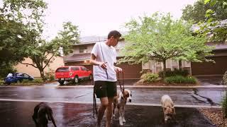 Dog Training | How to socialization | Funtastic K9 Training