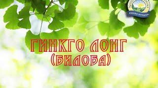 Ginkgo Long (Biloba)/Гинкго Лонг (Билоба) - чудо дерево(Уникальность Гинкго Билоба NSP заключается в том, что экстракт гинкго билобы обладает 12-часовым пролонгиров..., 2014-09-23T11:41:18.000Z)